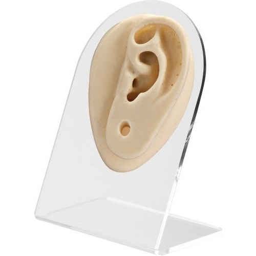 Body Mould Display Ear